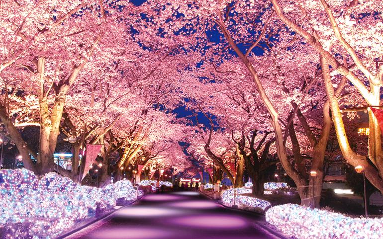 夜桜ジュエルミイメージ