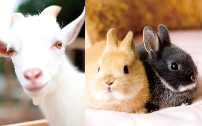動物イメージ