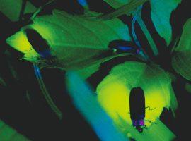 2018/6/1(金)〜7/1(日)の金・土・日曜よみうりランド聖地公園「ほたる・ねぶたの宵」
