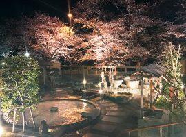 春風と夜桜を楽しむ露天風呂