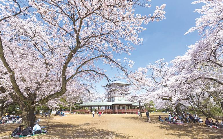 生田緑地 枡形山広場