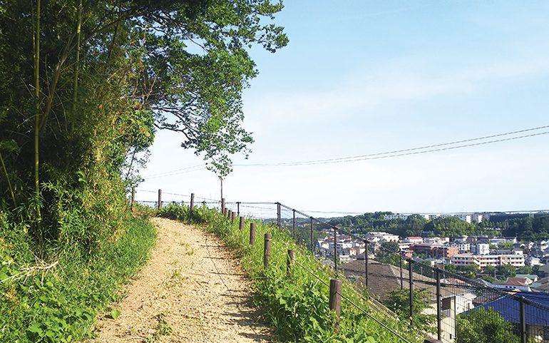 鶴川台尾根緑地