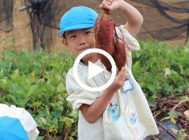 幼稚園ガイド「川崎青葉幼稚園」