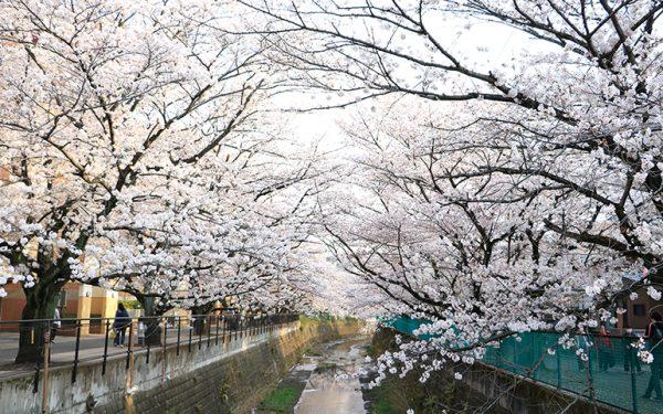 春の麻生川沿いイメージ