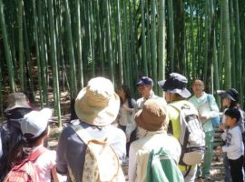 孟宗竹(もうそうちく)の林で行われた昨年の同イベントの様子