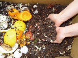 できあがった生ごみ堆肥を家庭菜園などに利用すれば、野菜はよりおいしく、花の色はより鮮やかになります。
