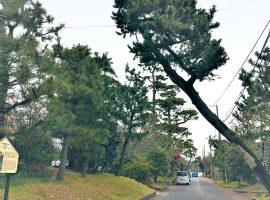 旧東海道大磯宿付近に残る松並木