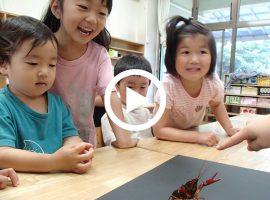 幼稚園ガイド「和光鶴川幼稚園」