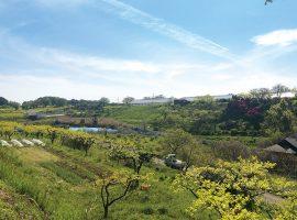 小田急線・鶴川駅からほどなくして広がる田園風景。田畑や緑の鮮やかな色合いや香りに、道行く人の心が和みます。
